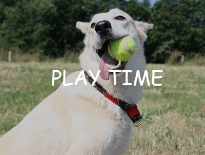 Styley Pets has a range of products to meet the needs of your pets - pet toys, grooming products, bowls, collars, leads, harnesses and clothing items.